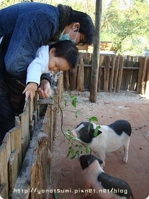 然後去一個小小農場玩
