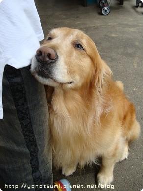 松竹園的店狗