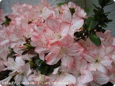 漂亮的不知名花