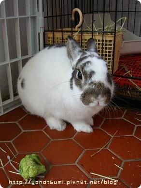 我的愛兔老三