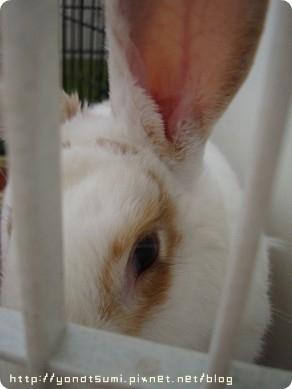 愛兔老二,葉妹妹