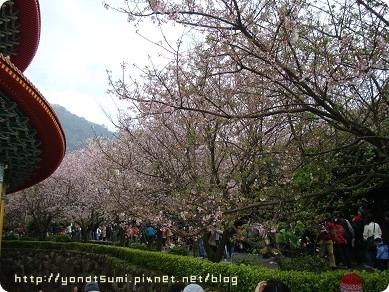 讓我想起京都的花