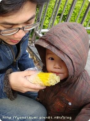 兩父子偷吃玉米