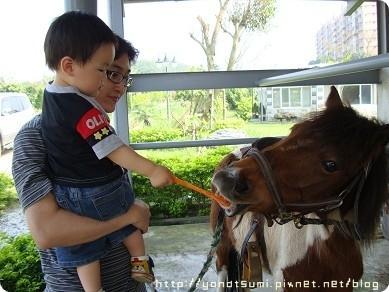 怕馬怕的要命