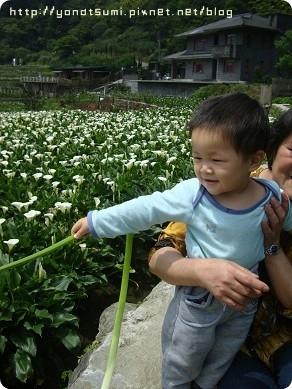 帶婆婆上山看花