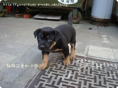 車站旁邊可愛的小狗