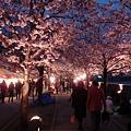 而且日本人超多,大家都在櫻花下吃小吃