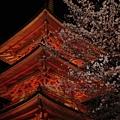 清水寺的夜櫻