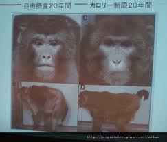 猴子实验(七分饱+十分饱)