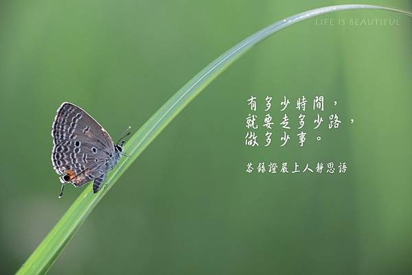 IMG_9840a