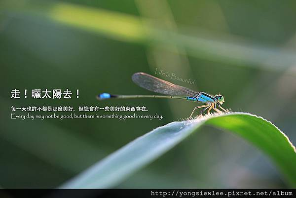20140218_YSL01_1_020a