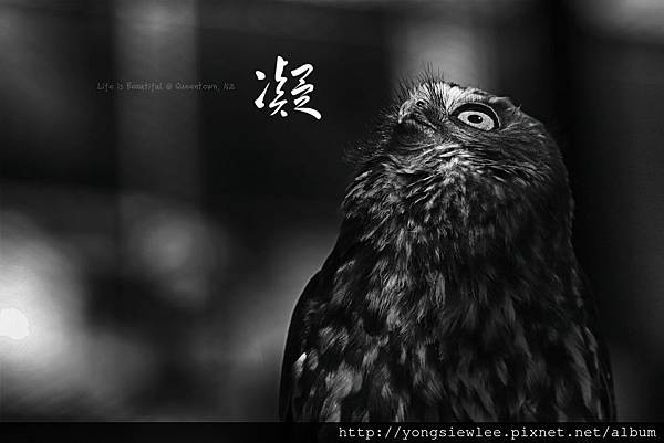 IMG_1856e_ysl_1.jpg