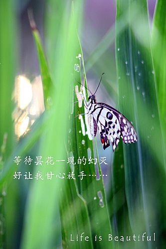 IMG_4987a.jpg