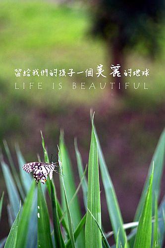 IMG_5020a.jpg