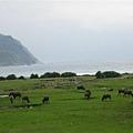 一堆吹著海風的牛牛