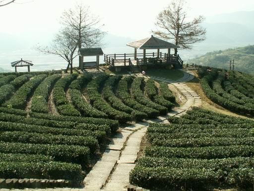 玉蘭荼園觀景台