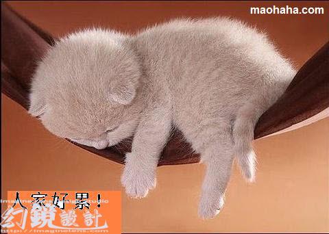 哥累了,哪都能睡
