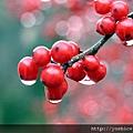 00224_berries_2560x1600.jpg