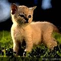kitten_meadow_1024.jpeg