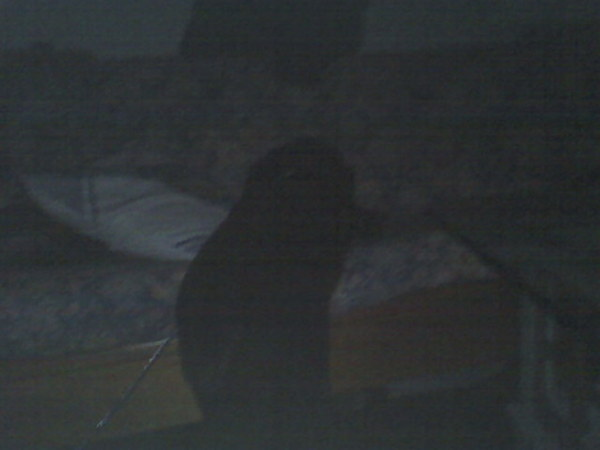 我沒有上沙發睡覺!