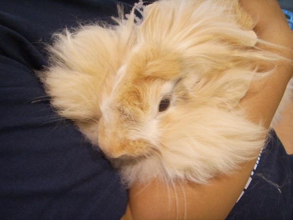 lulu混亂的毛髮
