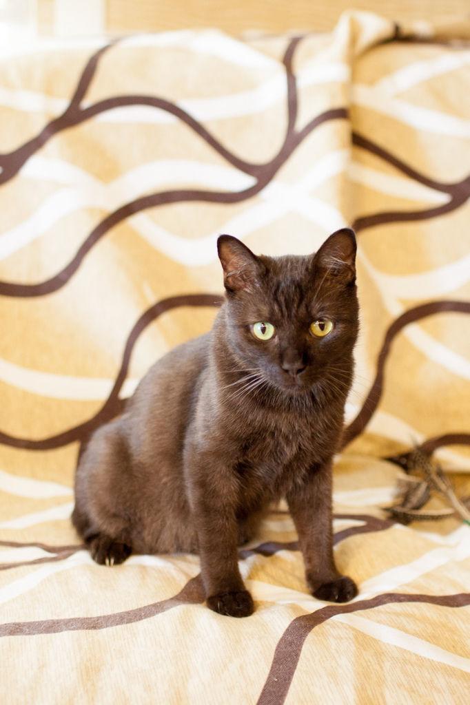 cat20150531-2