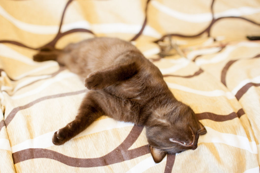 cat20150531-5