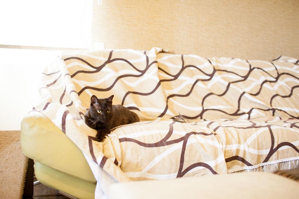 cat20150531-6
