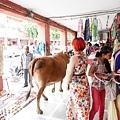 2016印度-1010094.jpg