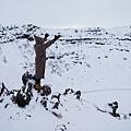 冰島joey網誌用-4.jpg