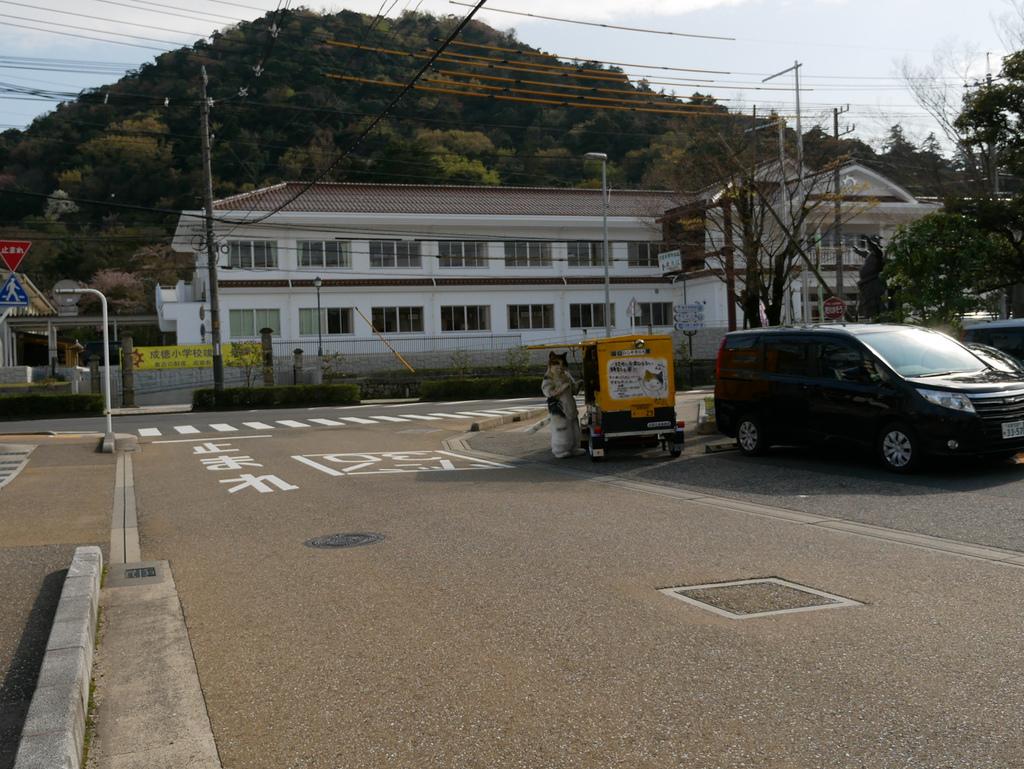 倉吉與醍醐櫻-12.jpg