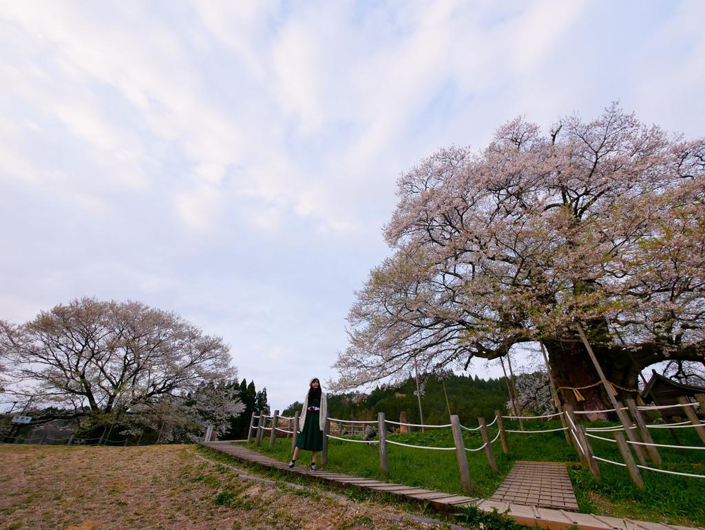 倉吉與醍醐櫻-36.jpg