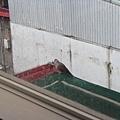 2010/06/30 窗戶的鴿子