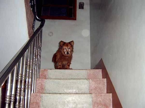 站在樓梯上