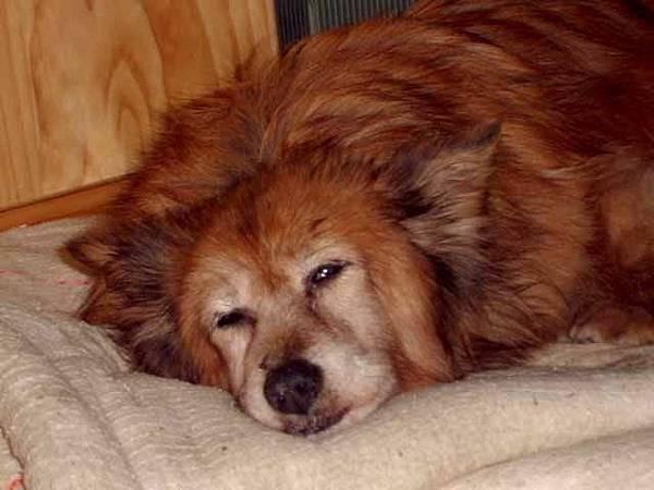 睡得好舒服的樣子