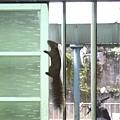 2009/10/12 松鼠