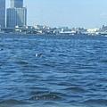 海上的海鷗