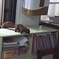 2010/05/14 松鼠來我們教室