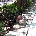 2010/07/18 麻鷺