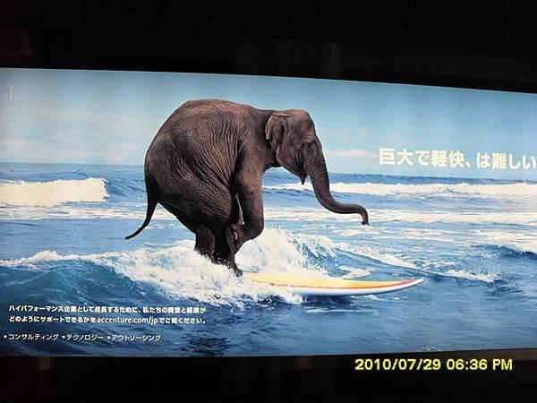 大象衝浪廣告