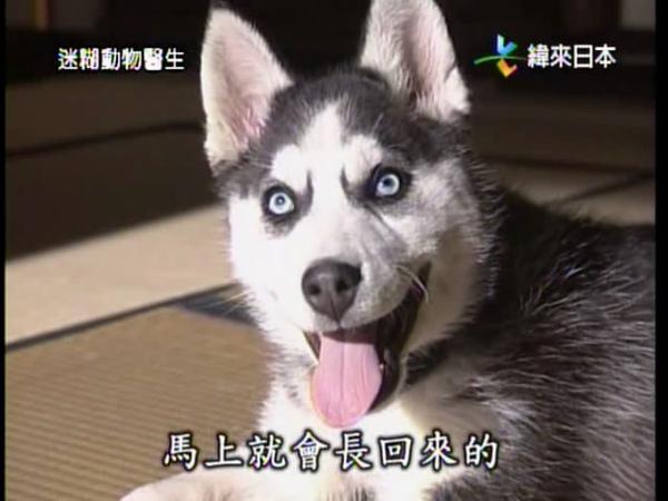 迷糊動物醫生-8.jpg