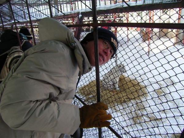 請不要把頭伸到籠子裡面..小心老虎咬你