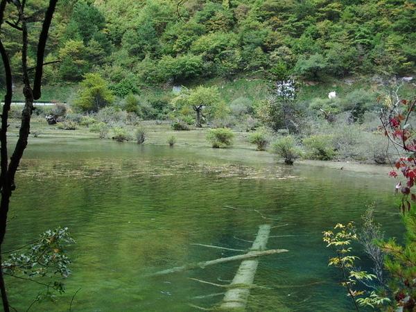 底下的樹木已經在水中很長的一段時間
