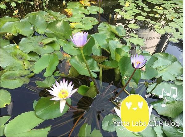 [CIP Blog] 億霈科技《小實習生的一天.16》南港軟體園區蓮花池