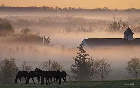 00284_foggyhorsefarm_2560x1600