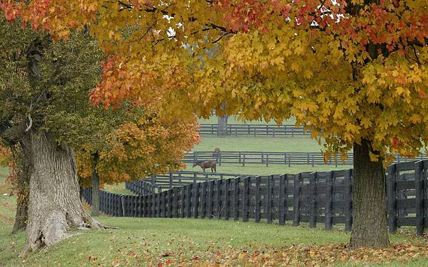 00288_horsefarm_2560x1600