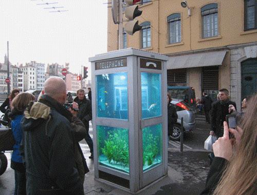 ★電話亭裡養魚★