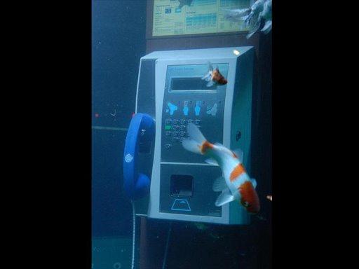 ★電話亭裡養魚★4