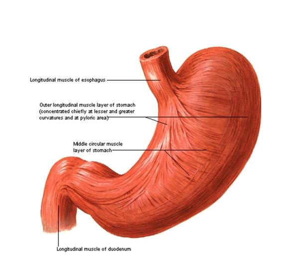 胃A.jpg