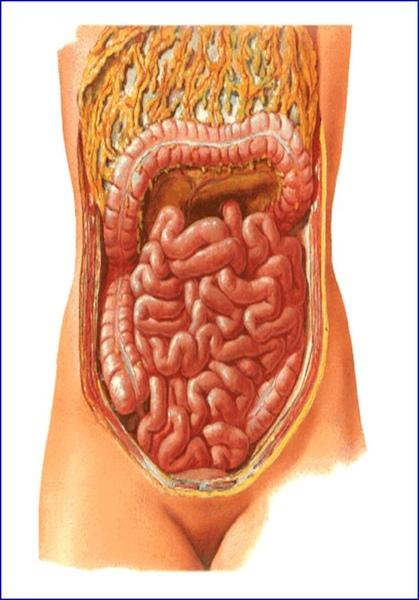 小腸.jpg